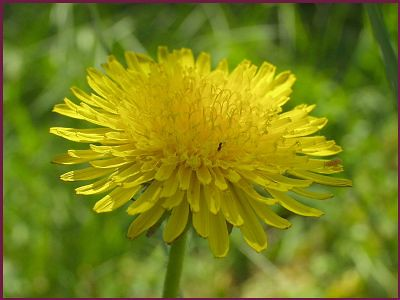 Thêm một chút cho hoa Bồ Công Anh - By Boong Boong - Yahoo 360! 430193716_e747c6e9d4