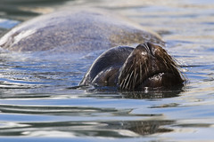sea-lion-morro-bay_1