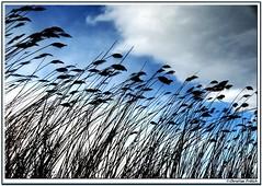 Nature (Christian Frlich) Tags: sky espaa naturaleza nature landscape spain cielo mallorca majorca salbufera naturesfinest superaplus aplusphoto superbmasterpiece paisajeparquesalbufera 4aplusphoto