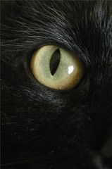 Lulu's eye (Pulseman) Tags: macro cat blackcat cateye cc100 abigfave diamondclassphotographer flickrdiamond pet100