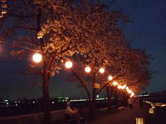 夜桜-2007-
