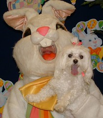 Dog with the Easter Bunny