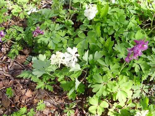 Osterwaldspaziergang Flowers
