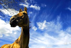 gold in the sky (Dan65) Tags: sky horse clouds golden bravo 15 explore akhalteke magicdonkey specanimal abigfave gazan