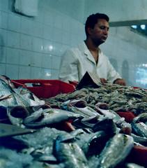 Souk, poissonnerie (Richard Lehoux) Tags: fish tunisia souk poisson tunisie nabeul