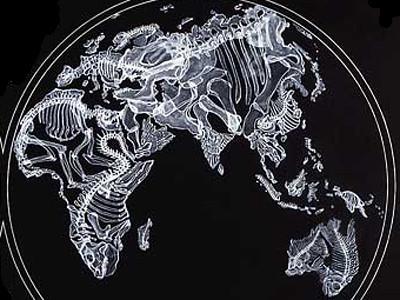 X Ray Art