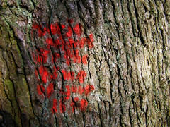 Varje minut r the time of your life (Eva the Weaver) Tags: red tree writing stencil bark link rough graff wisdom association profound tenuous farfetched tenuouslinks tenuouslinl