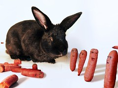 Carrots had a bad day (Fer Gregory) Tags: pictures life camera shadow orange pet white black milan rabbit animal mxico mexico for interestingness hilarious interesting funny flickr photographer with shot artistic little photos action eating lol background sony hunting taken 8 ears cybershot run mexican eat your fotos scream carrot fernando mexique lives carrots scared gregory screaming 80 rabitt f828 mexicano camara con recent dsc hunt megapixel tomadas relevant freg dscf828 artisticas rabbitt megapixeles abigfave superaplus aplusphoto fr3g cybershotdscf828 reg