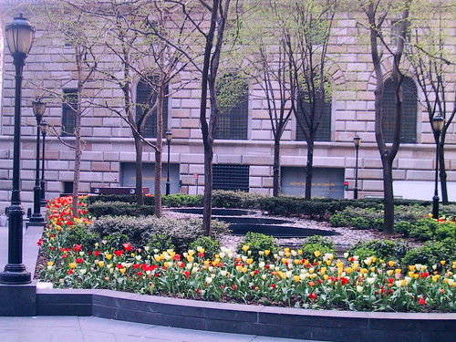 Lower Manhattan Tulips