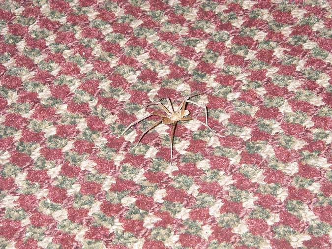 Spider070330_04