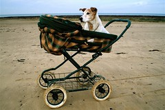 Bobby. (DJ Bass) Tags: uk england beach dogs woof kent bark seashore margate soe bizarre eccentrics dogsonthebeach 25faves abigfave p1f1 artlibre dogsinprams englisheccentricities