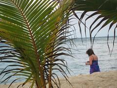 jamaica 237
