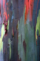 IMG_0163 (morphblade) Tags: rainbowtree
