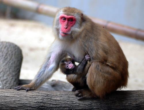 Japanese monkey , Everland zoo by floridapfe.
