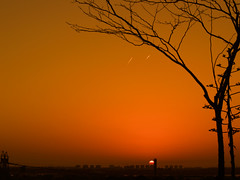 Cielo Naranja (Pedrali) Tags: beautiful contraluz atardecer bravo huelva cielo naranja 100club rbol olympuse500 larbida instantfave 50club 25faves 5for2 ltytr2 ltytr1 parquecelestinomutis