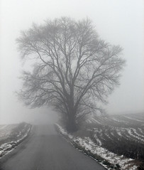 Lonely Birthday (cindy47452) Tags: road birthday snow tree rain fog evening artistic indiana slush 100views 400views 300views 200views 500views breathtaking aa 800views 600views 700views 1000views forpaul helluva quoted 2000views mpf lawrencecounty 900views 2500views 1100views 1200views 1300views 1800views 1500views 1400views 1600views 1700views 1900views 2300views mywinners photology thoughtstoliveby anawesomeshot 2100views 2200views ysplix 2400views worldwideopen dragondaggerphoto dragondaggeraward