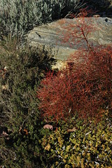 Winter Foliage, Woodfield Inn