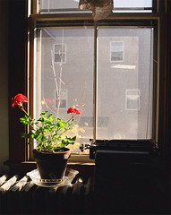 Early Winter with Geranium