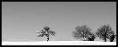 Progression (Jessie Romaneix ) Tags: winter bw white snow france landscape nikon d70 noiretblanc hiver nb neige 13 campagne blanc creuse lapetitemaison lioreix jan2007 intempries
