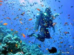 373092812 f46938c0fa m Delicate Coral Reefs