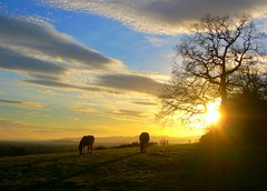 Crookbarrow Horses (flash of light) Tags: sunset england sky horses tree clouds geotagged evening searchthebest hill january 7 junction worcestershire m5 worcester 2007 whittington impressedbeauty crookbarrow geo:lat=52168826 geo:lon=2183018