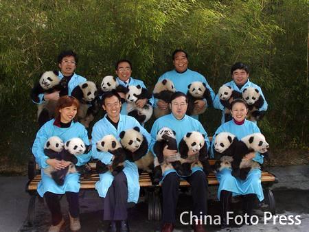 Panda baby-boom class=