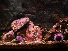 One of the exhibits at the Seattle Aquarium (akraj) Tags: seattle water aquarium e500 exhibt
