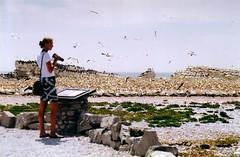 (Koffiemetkoek) Tags: africa travel nature birds southafrica vogels afrika reizen koffiemetkoek zuidafrika lambertsbaai