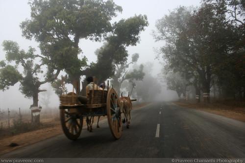 shimoga, karnataka