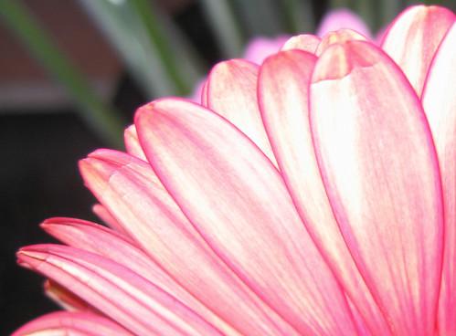 flower fan fun....