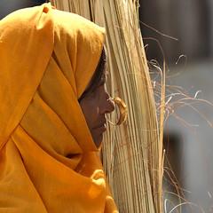 Eritrean Woman With Nose Ring, Keren, Eritrea (Eric Lafforgue) Tags: africa hasselblad eritrea hornofafrica eastafrica aoi eritreo h3d erytrea lafforgue erythre eritreia  ericlafforgue ertra    eritre eritreja eritria h3d39 wwwericlafforguecom  rythre africaorientaleitaliana noseringthefeminine     eritre eritrja  eritreya  erythraa erytreja     a0005995