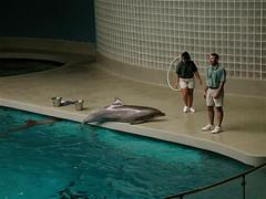 Mystic Aquarium (moacirdsp) Tags: usa 2000 connecticut dolphins mystic marinemammals mysticaquarium usa2000