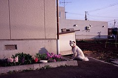 neighboring dog (miwas) Tags: dog film japan 35mm rangefinder wideangle contax wideanglelens contaxg1 28mmf28