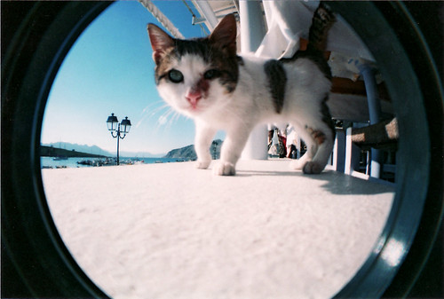 Cats love fisheye 1.