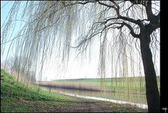 NL/Nature/Lekdike (oopsfotos.nl) Tags: light holland green nature water netherlands grass spring haze thenetherlands fresh willow gloom r1 dike oop riverlek lekdike