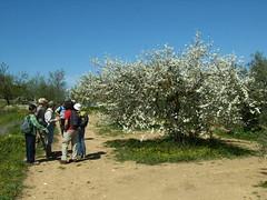 S Martilla 10-03-2007 13-24-10 2048x1536 (Caminos de Mlaga 8) Tags: los sierra loja ponient