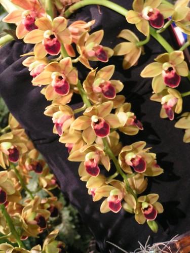 orchids16