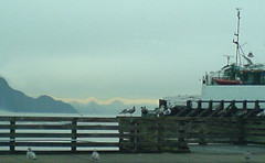 Birds at Ferry Dock (Andrew M Aaron_W07) Tags: aaron andrew w07