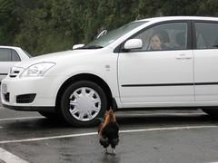 Das Huhn und ich