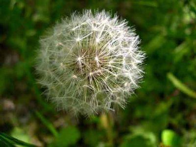 Thêm một chút cho hoa Bồ Công Anh - By Boong Boong - Yahoo 360! 430193722_fed0ca885c