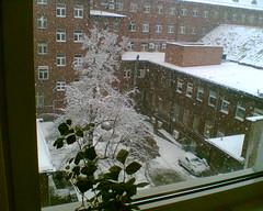 Zima w biurze (eliza_danak) Tags: zima nieg okno widok patki