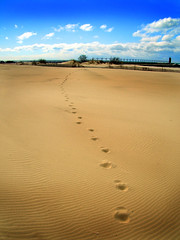 Leave Only Prints (pnygirl1) Tags: lake beach sand michigan footprints anawesomeshot