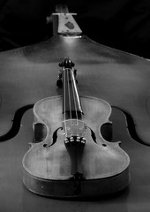The Rescued and the Lost (Lauren Stolzar) Tags: blackandwhite bw music bass violin strings tension fhole