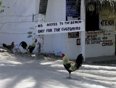 Guard roosters