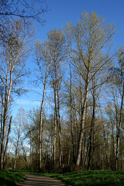 A Nice Copse of Trees