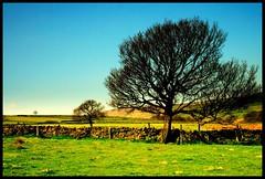 (andrewlee1967) Tags: trees fields yorkshire andrewlee1967 uk bravo naturesfinest aplusphoto canon400d england landscape focusman5 andrewlee