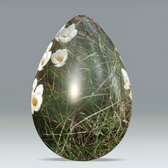 crocus egg