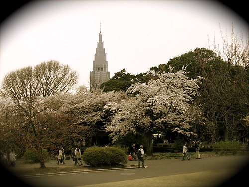 Hanami - Shinjuku-gyoen
