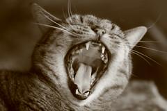 Cat 2 (Evelyn Arthur Richman) Tags: blueribbonwinner bestofcats boc0807