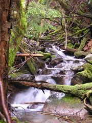 Trailside Stream 2